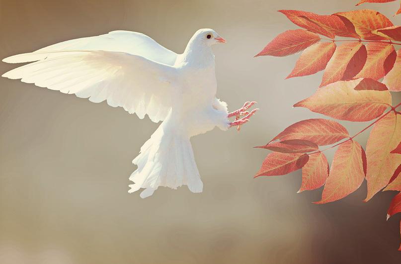 Gebet für den Frieden Hl. Franz von Assisi