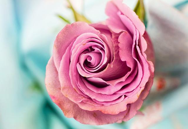 Die Rose Inspiration Lyrik Reflexion Weisheit