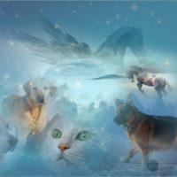 Tiere im Jenseits Wohin gehen Tiere nach dem Tod