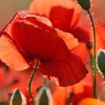 Haben Pflanzen ein Bewusstsein?